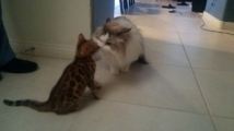 Xena meets another cat…Chloe