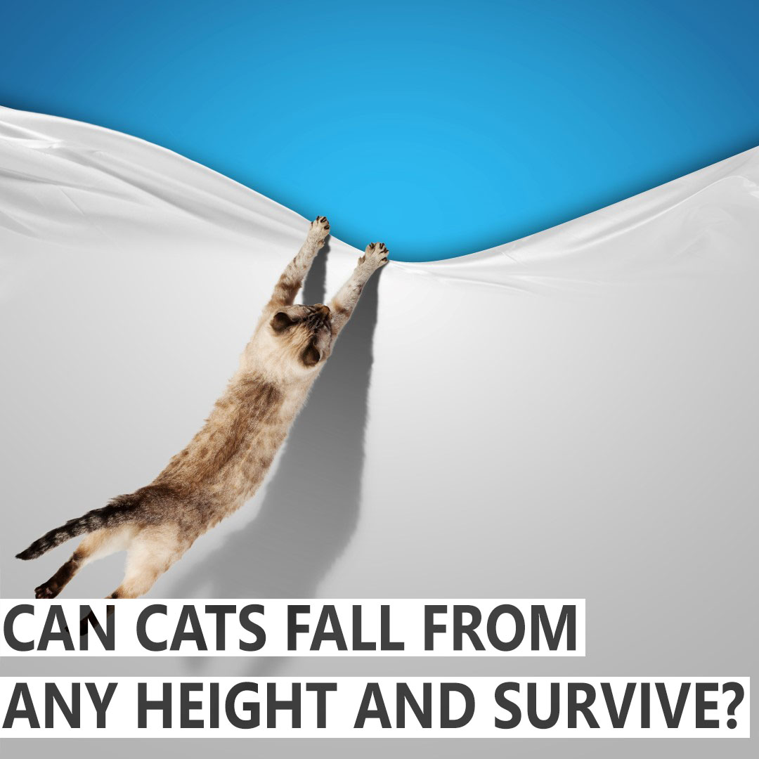 At What Height Can A Cat Survive A Fall