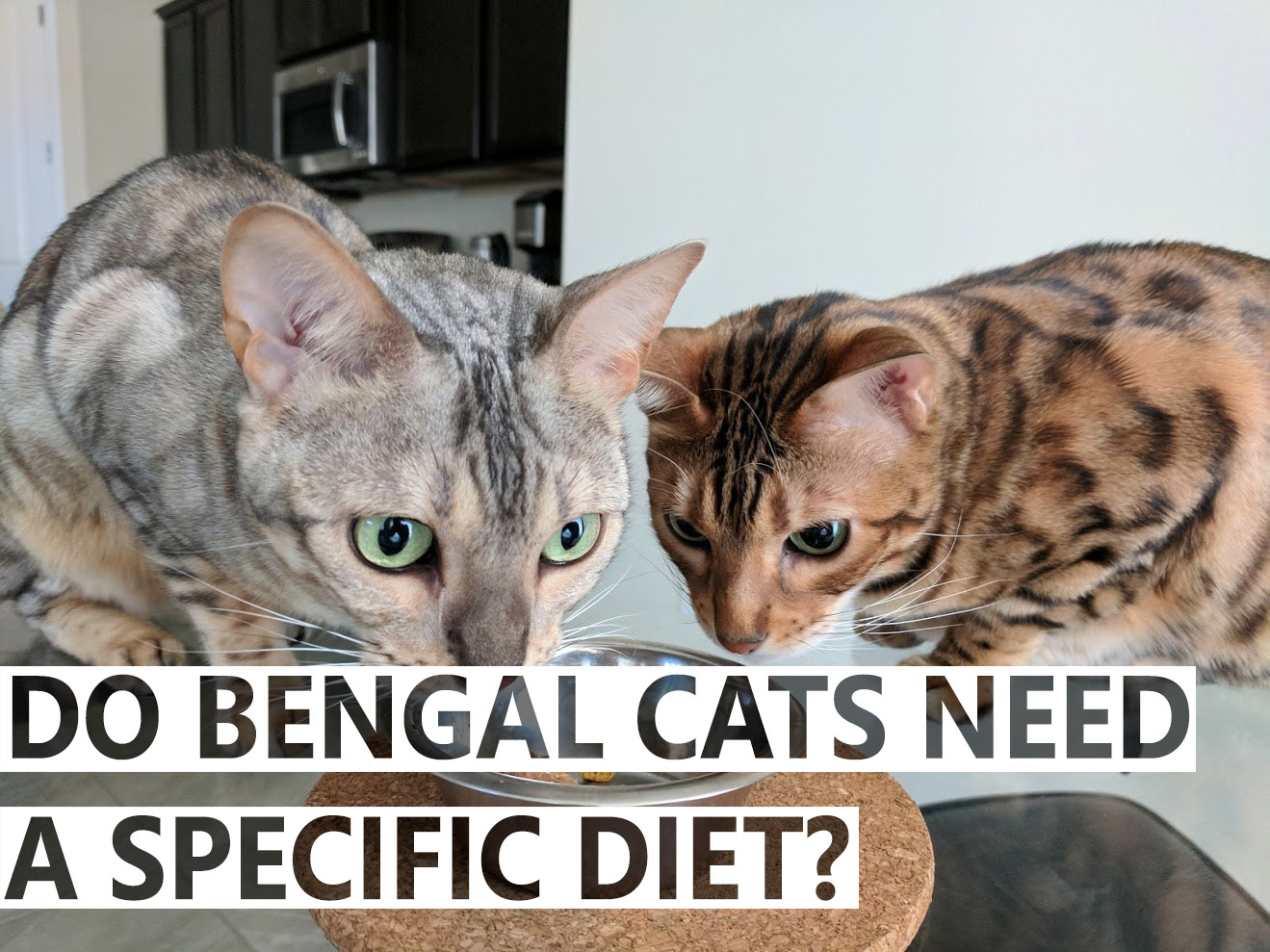 Do Bengal Cats Need A Specific Diet? - BlindBengal